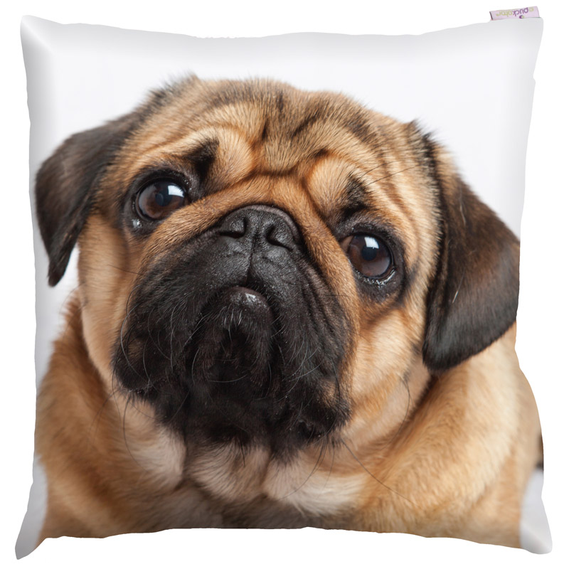Decorative Pug Print Cushion